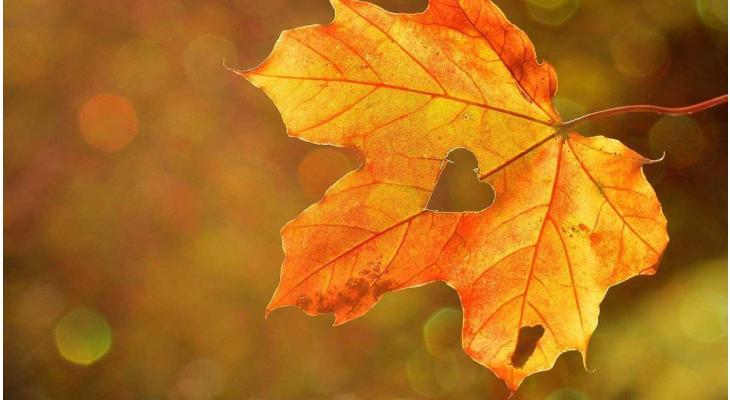 Warum ist der Herbst die ideale Pflanzzeit?