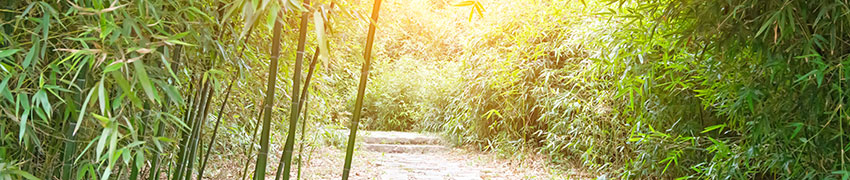 Bambus-Art