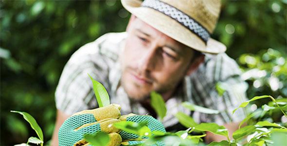 Heckenpflanzen Österreich